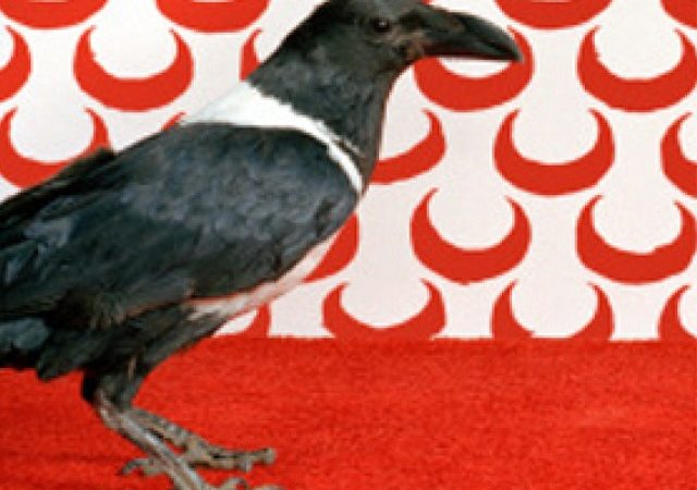 Il corvo di Kader Abdolah